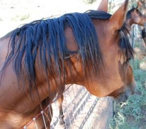 Snakke med en hest