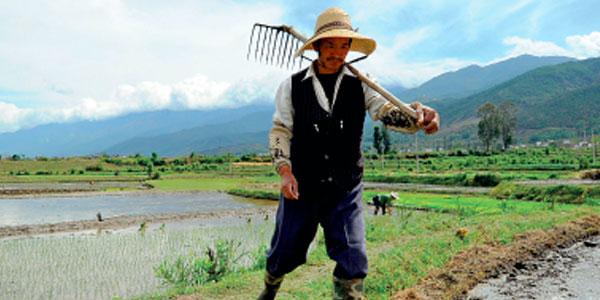 Kinesisk bonde på marken