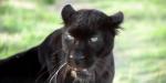 The Animal Communicator: Hva om du kunne snakke til dyr, og forstå hva de svarte deg?